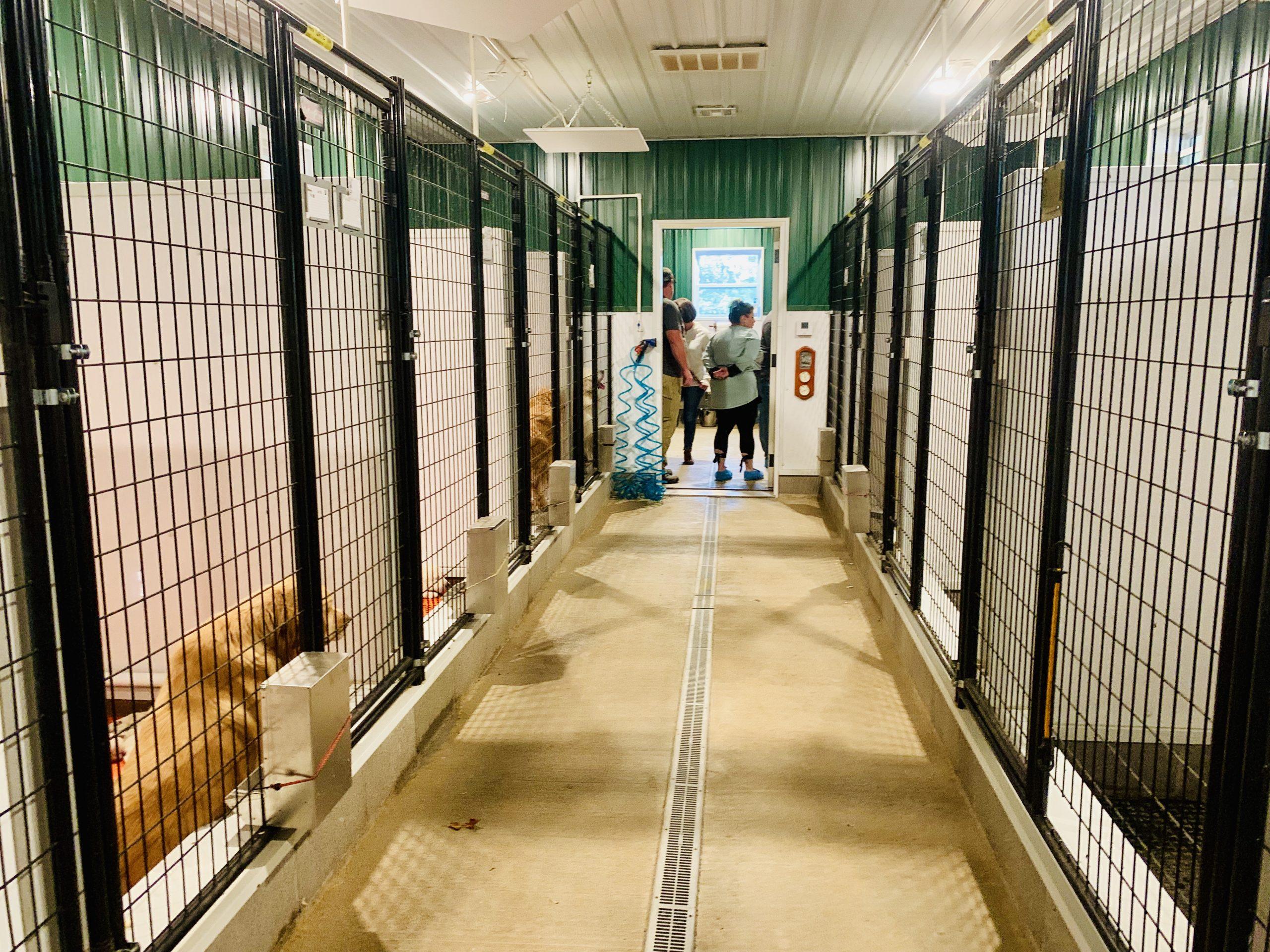 Inside of kennel
