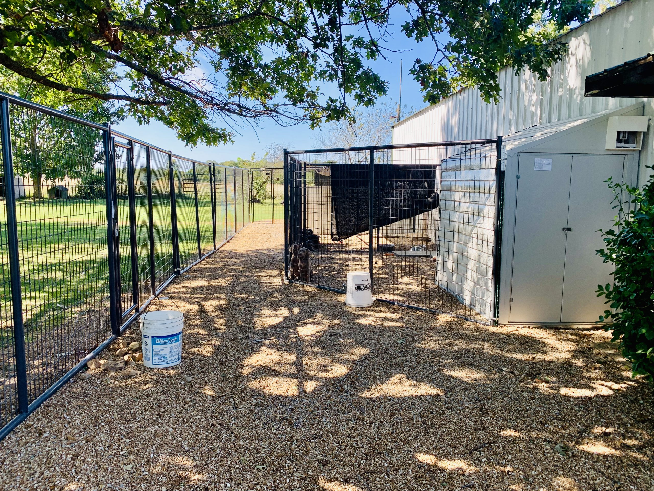 A view of Cindy's kennel