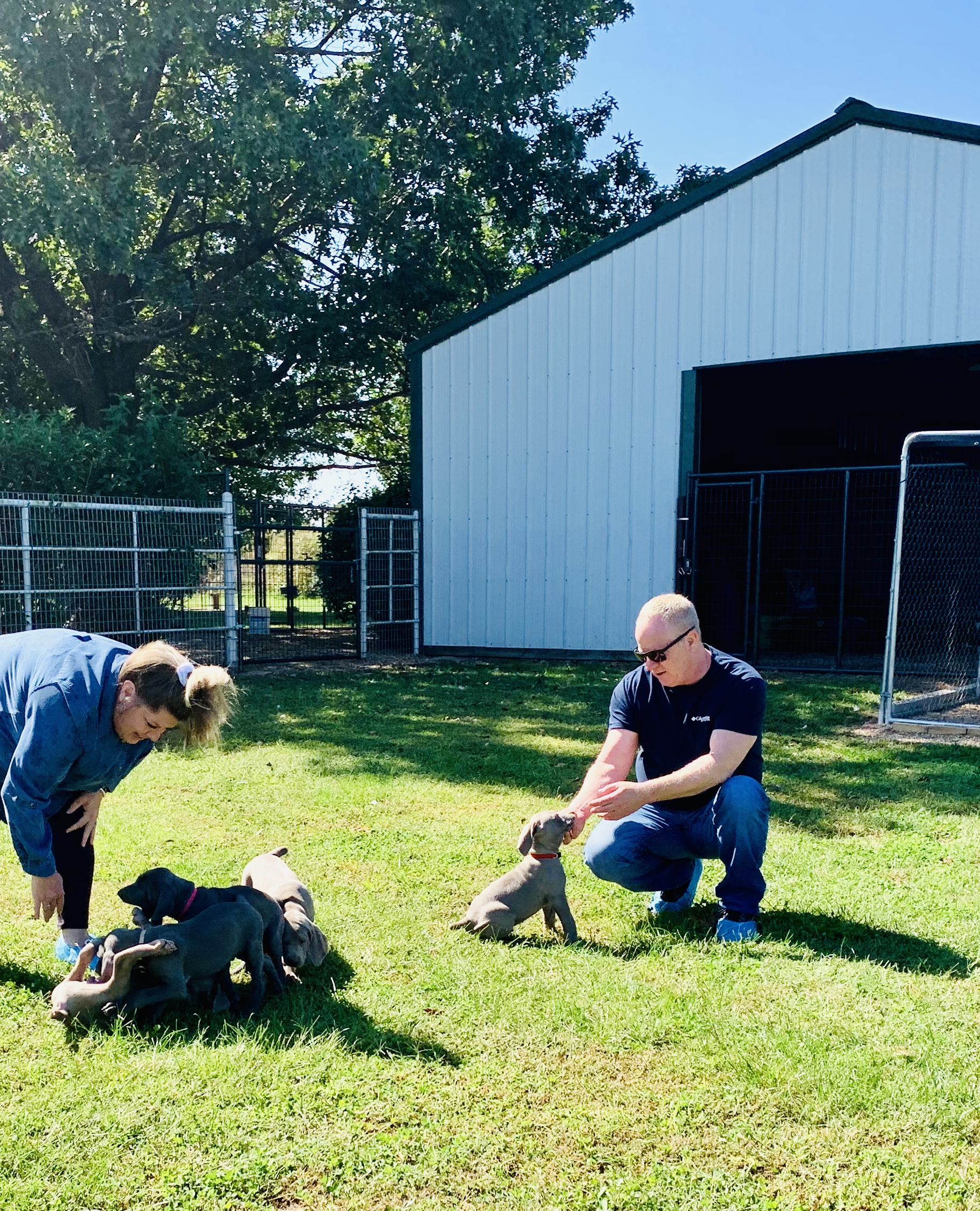 CPI owner and employee play with a group of Cindy's puppies