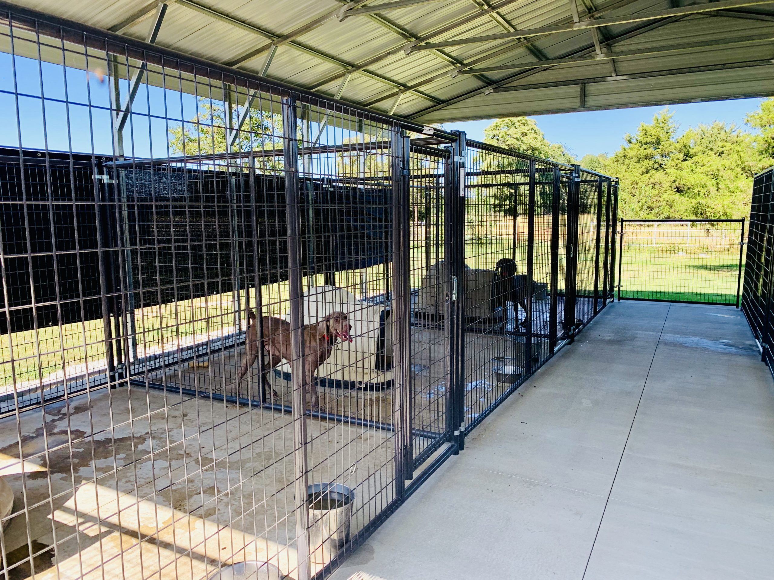 View of Cindy's kennel