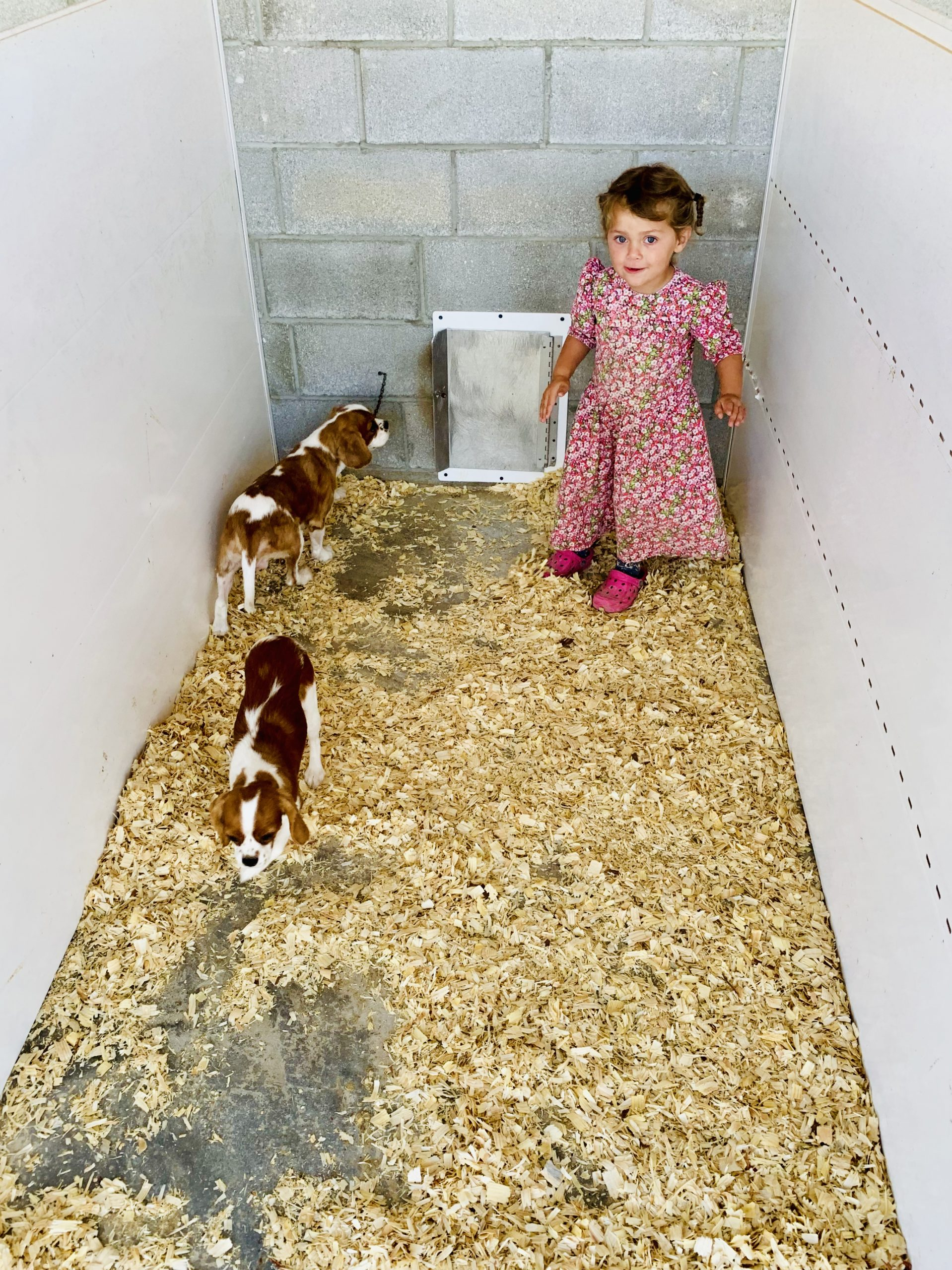 Glen's daughter playing with the puppies