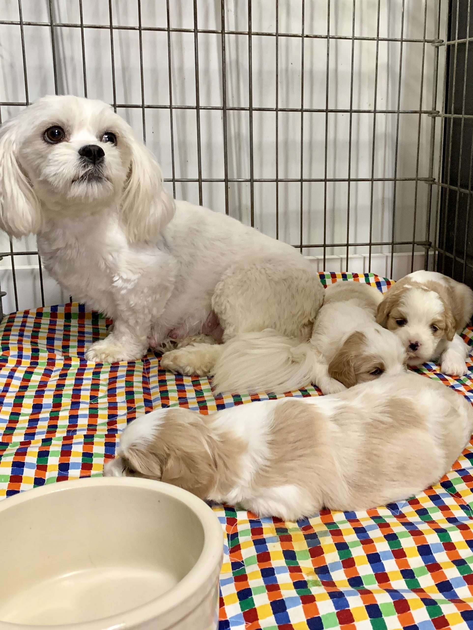A momma and her puppies