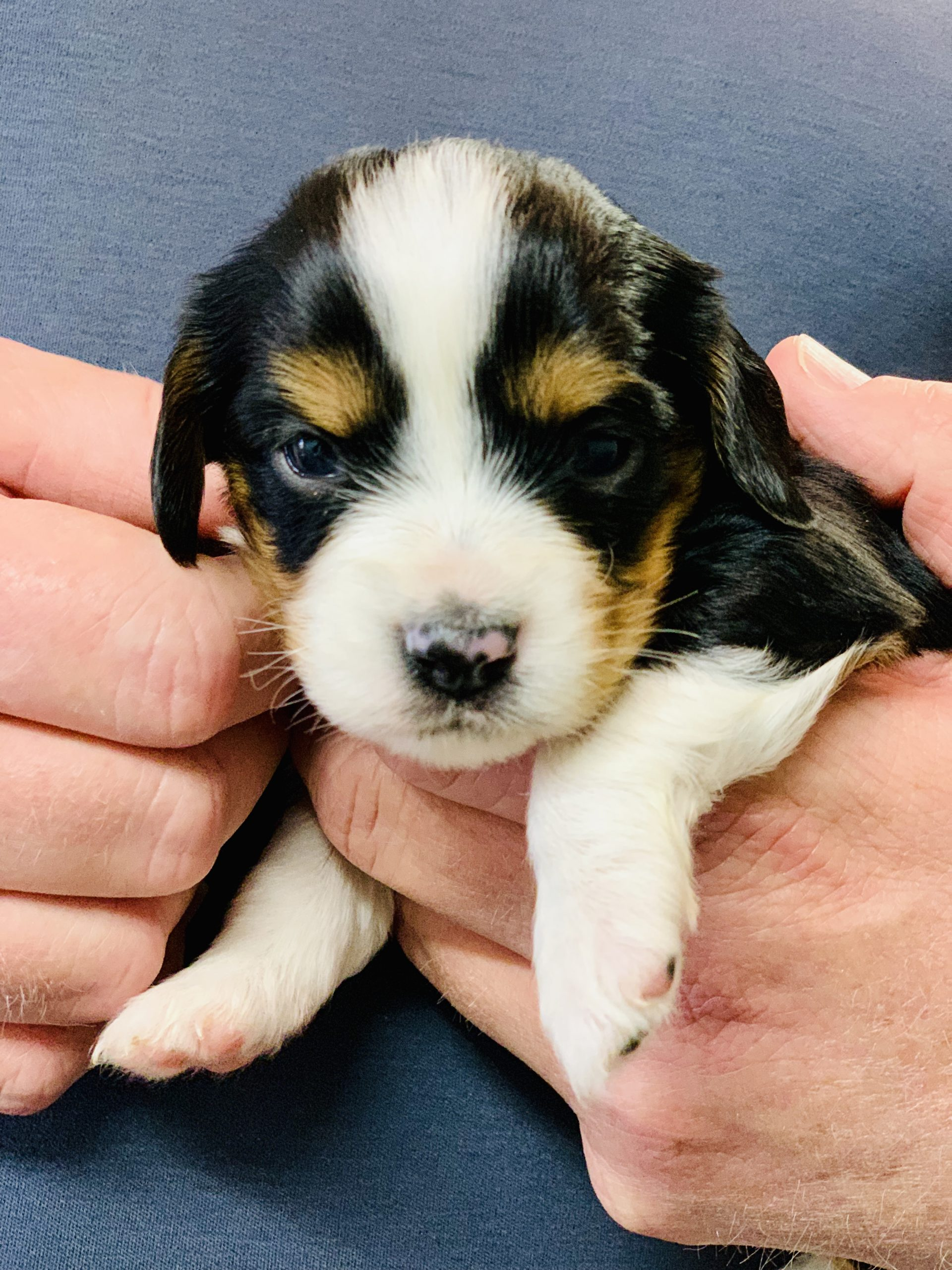 One of Kelley's puppies
