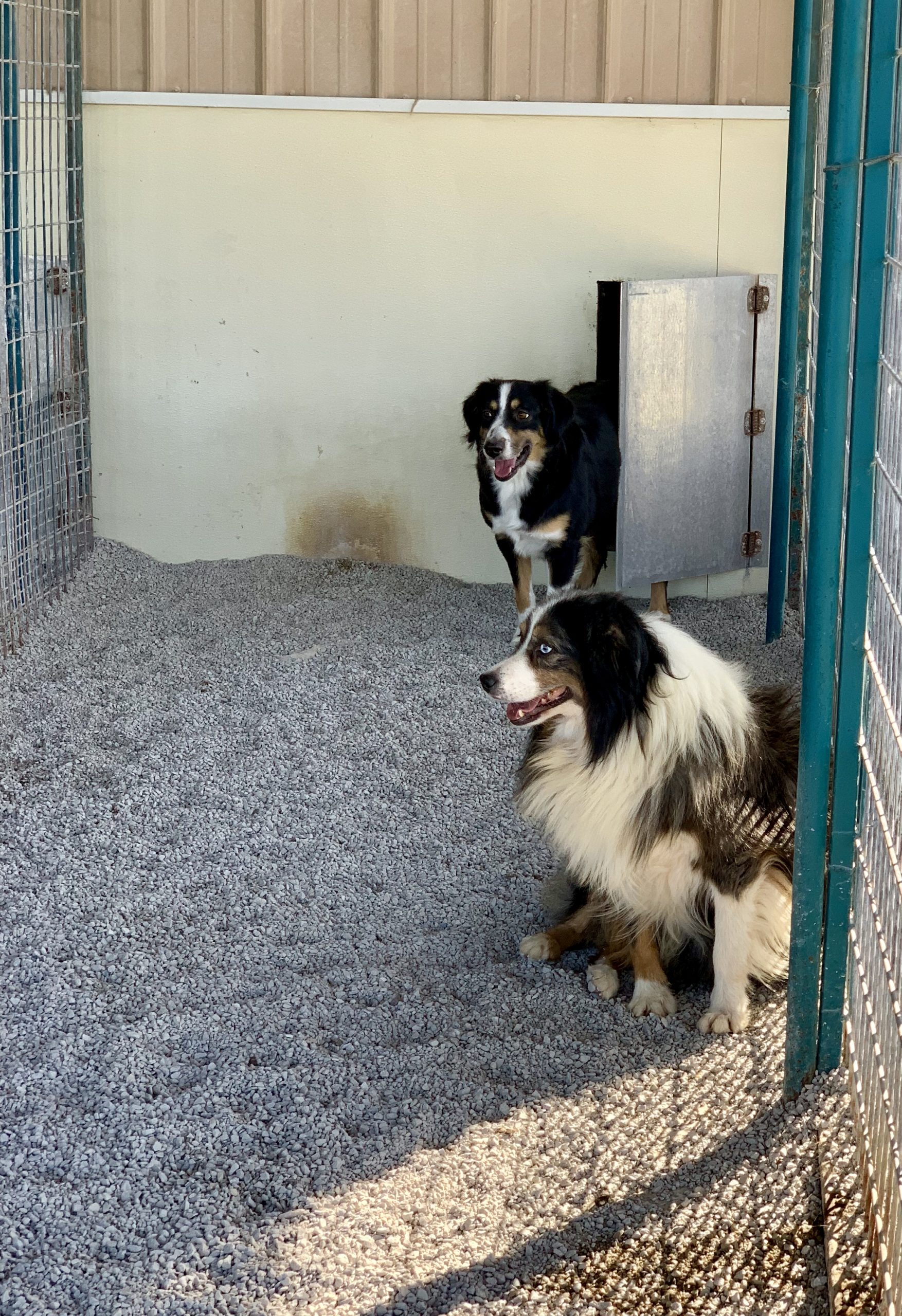 Happy dogs in their kennel