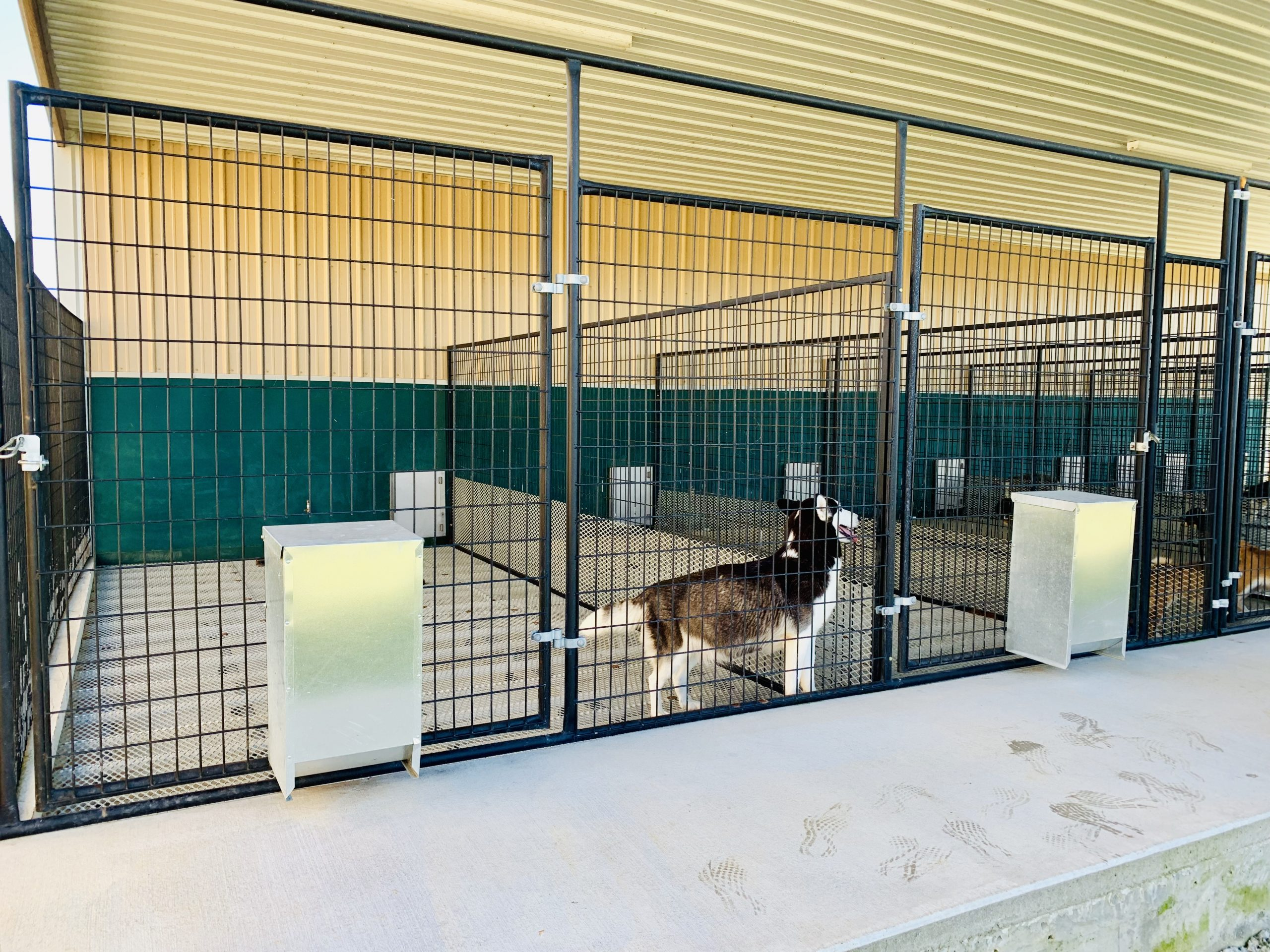 A view of Tim and Lisa's kennel