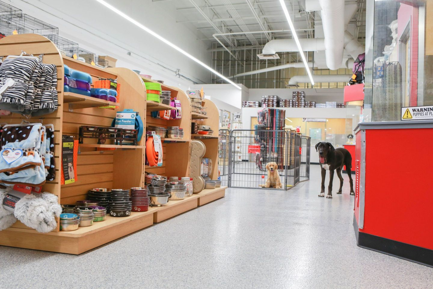 Our stores are one-stop-shops for taking home a furry family member