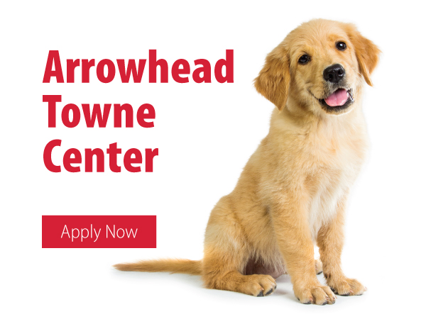 Pet Financing Animal Kingdom Puppies N Love