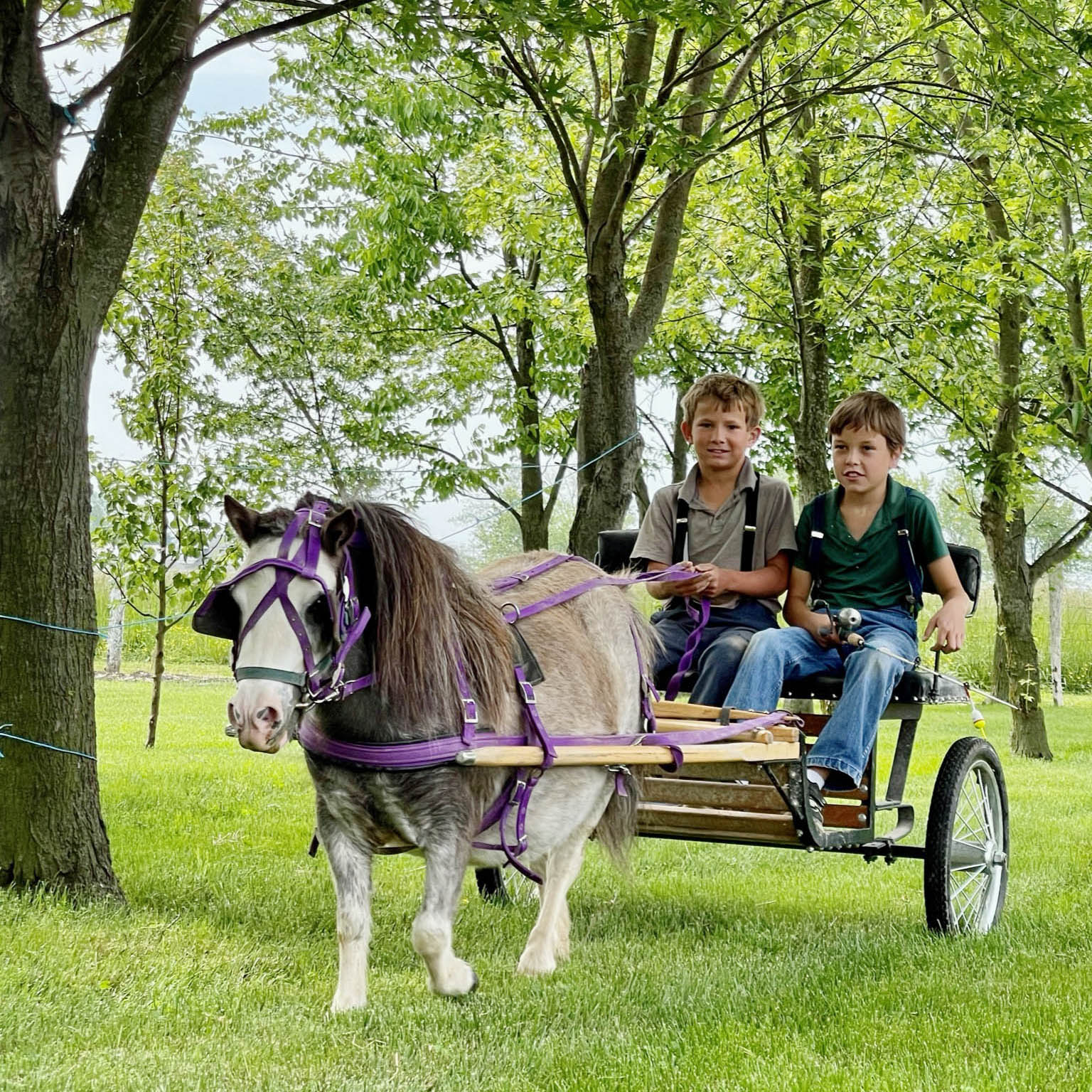 Young Amish boys riding in a horse-drawn buggy