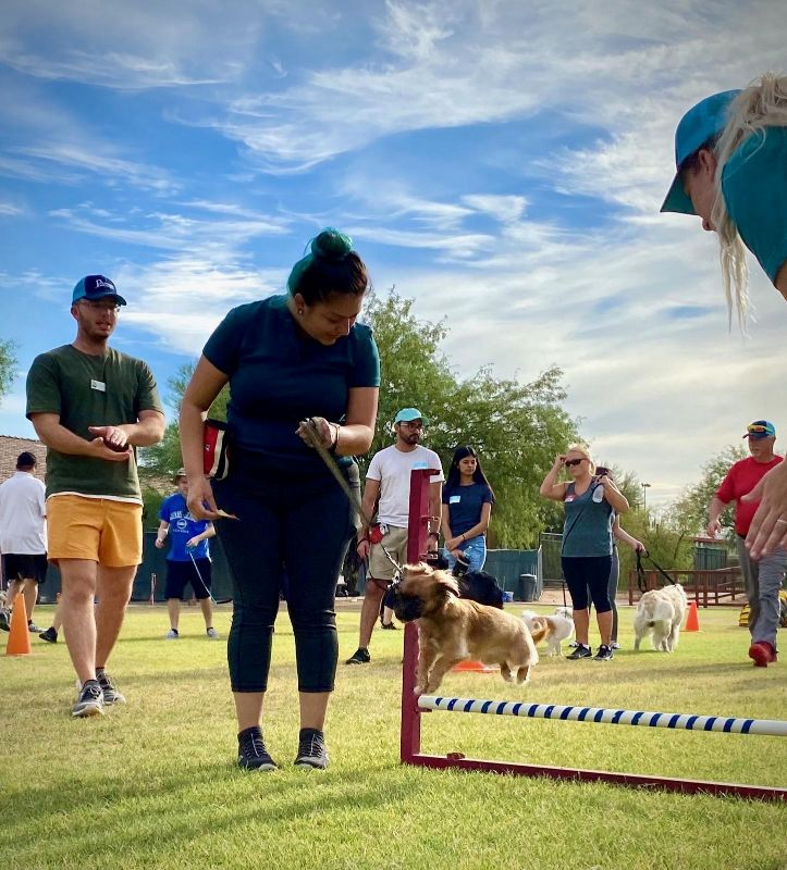 Puppy and employee participating together in some agility training