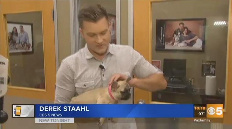 Bulldog Bandit Hits Puppies 'N Love at Arrowhead Mall. Watch the full story here. Puppies Animal Kingdom Arizona