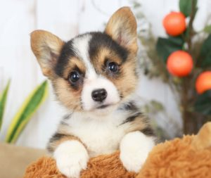 cute puppy posing for picture