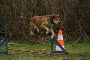 dog jumping over obstacle