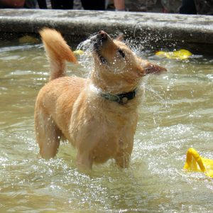 dog in pool of water