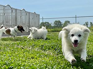 Steven L Graber Puppies Animal Kingdom Arizona