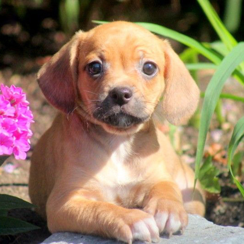 Freagle Puppies Animal Kingdom Arizona