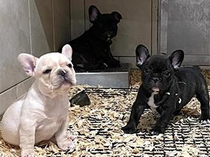 David J Graber Puppies Animal Kingdom Arizona