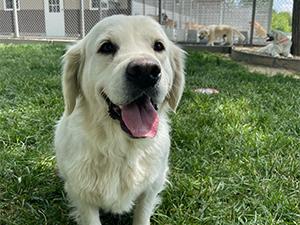 Marcus Wagler Puppies Animal Kingdom Arizona