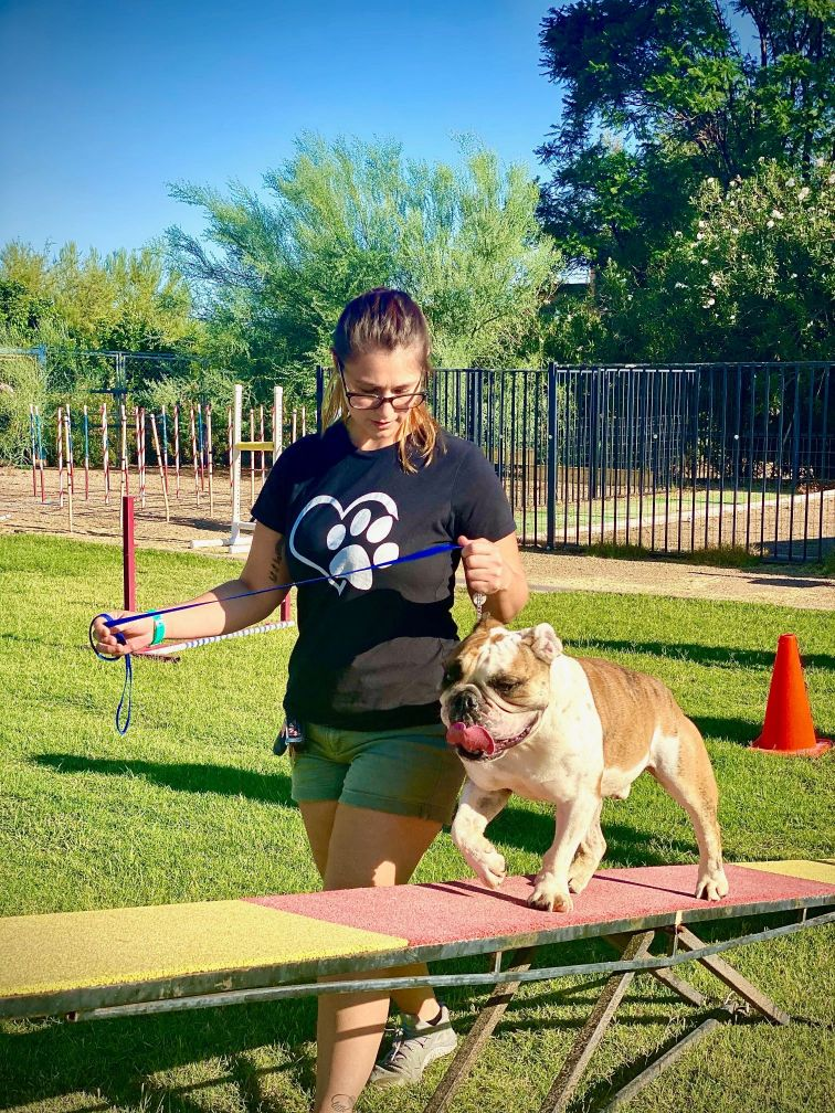 Basic agility training with one of our dogs