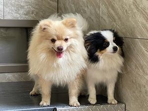 Tim & Mary Knepp Puppies Animal Kingdom Arizona