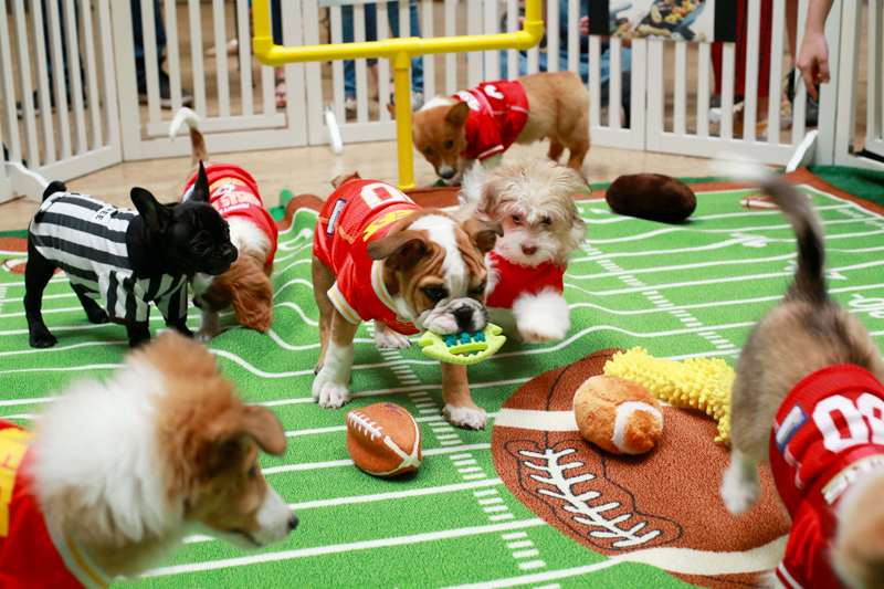 Puppy Bowl in Action