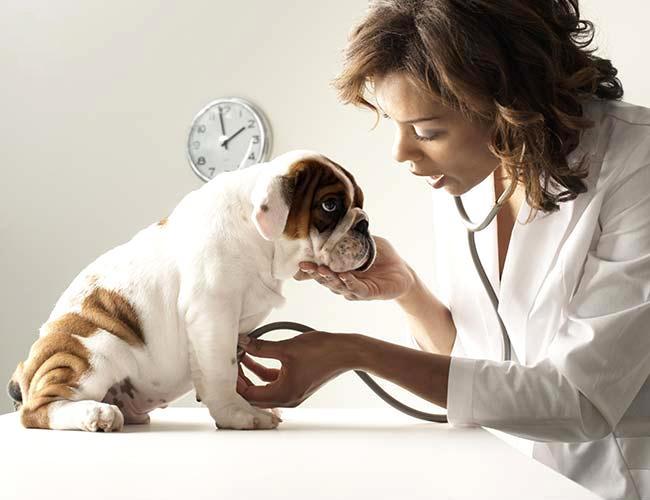 Recommended Veterinarians Puppies Animal Kingdom Arizona