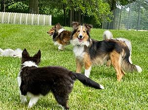 Lester & Bonita Kemp Puppies Animal Kingdom Arizona